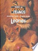 Diario De Grandes Felinos : Leones